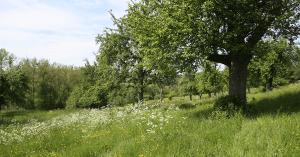 Natuurrijk Limburg Zuid bosbehoud