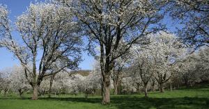 Natuurrijk Limburg Zuid soortenbescherming